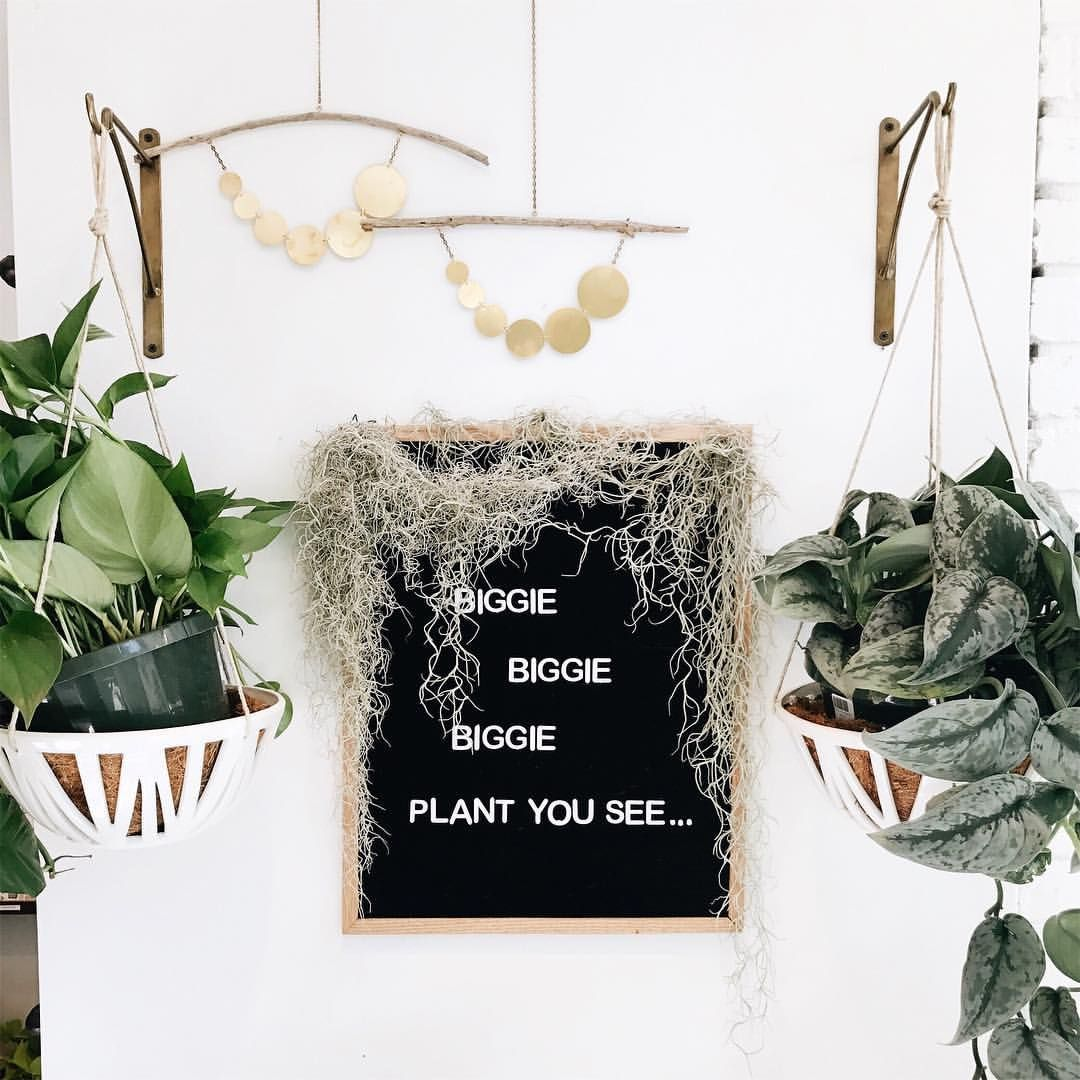 "Letterfolk sign, plants (@rachellynphotog) on Instagram: ""Some great Biggie signage spotted at @littleleafshop today 😍🌿"""