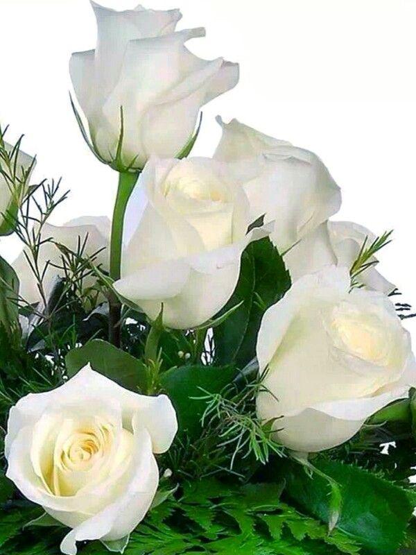 Rosas blancas | Flores Maravillosas | Pinterest | Rosa blanca, Rosas ...
