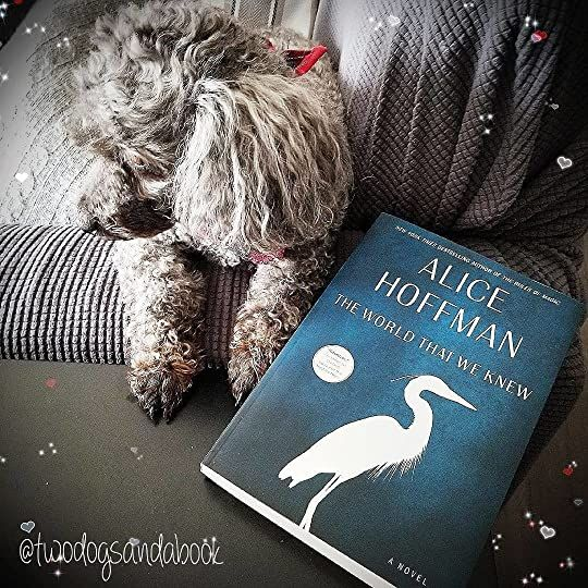 Click on the image to read my complete book review. #bookstadog #poodles #poodlestagram #poodlesofinstagram #furbabies #dogsofinstagram #bookstagram #dogsandbooks #bookishlife #bookishlove #bookstagrammer #books #booklover #bookish #bookaholic #reading #readersofinstagram #instaread #ilovebooks #bookishcanadians #canadianbookstagram #bookreviewer #bookcommunity #bibliophile #bookphotography #theworldthatweknew #alicehoffman #bookreview