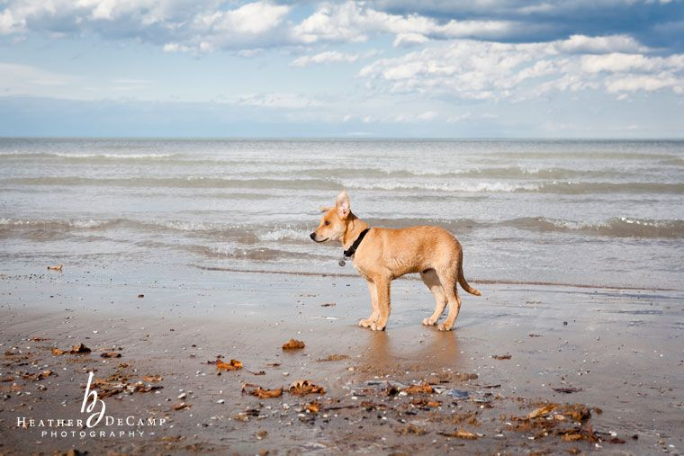 Pin By Lisa Wormell On Heather Decamp Photography Dog