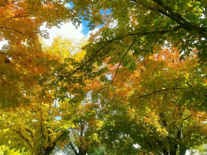 Fall trees at eastern oregon university