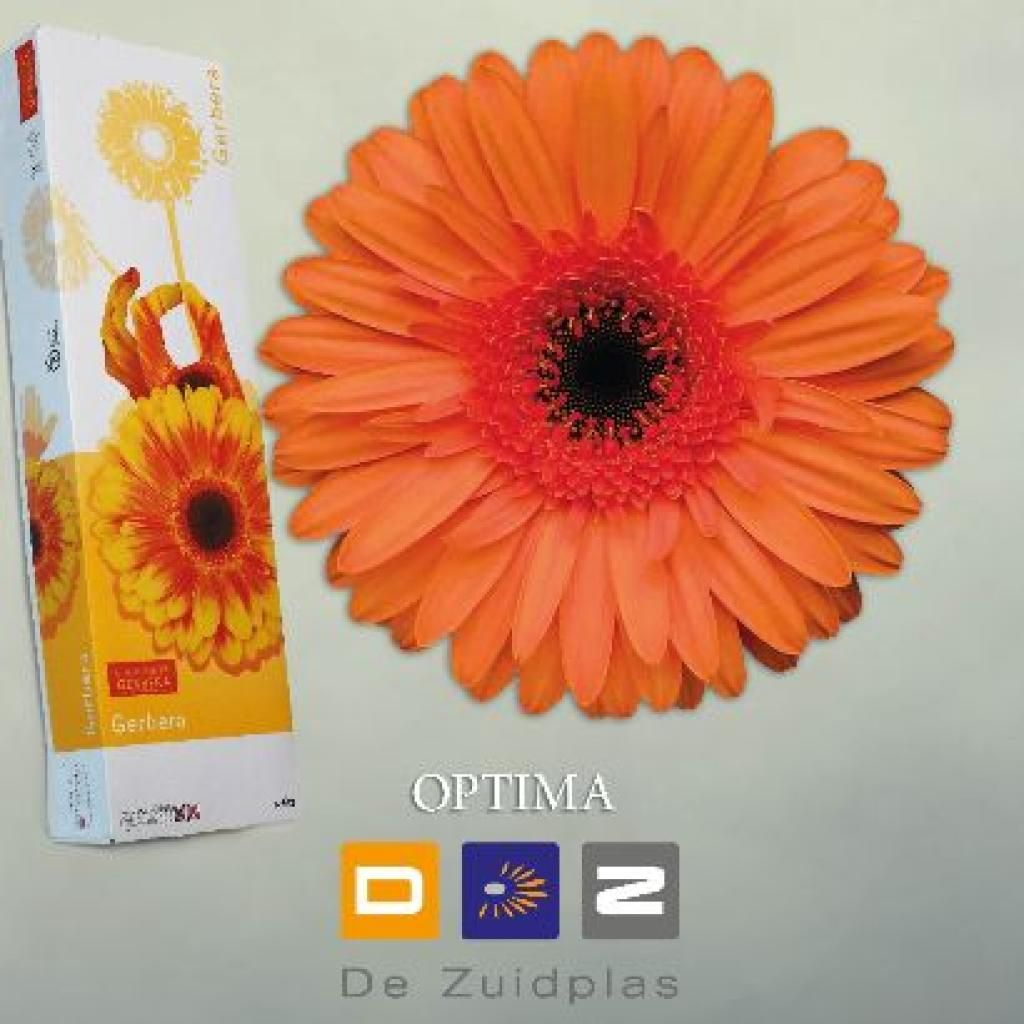 Gerbera Optima Is An Exquisite Orange Variety With A Dark Centre Floral Sundries Flower Guide Florist Supplies