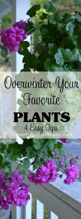 Overwinter your Favorite Plants - Flower Patch Farmhouse