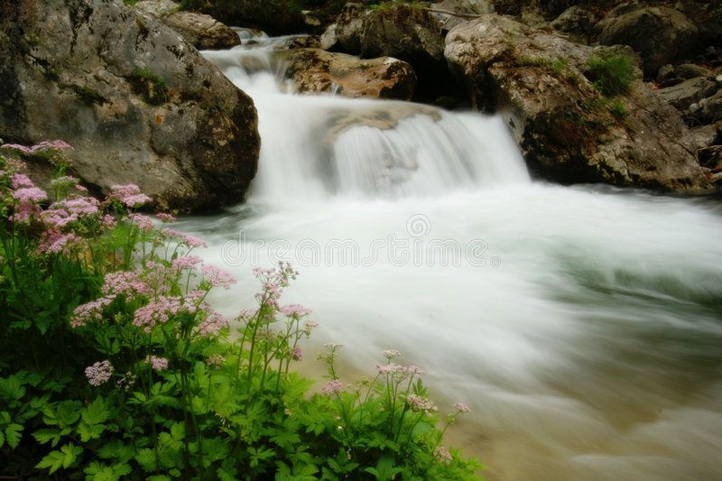 Refreshing. Flowers and waterfall ,    Flowers and waterfall ,