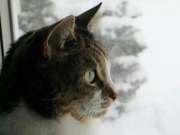 Buddie watching the snowflakes fall ♥