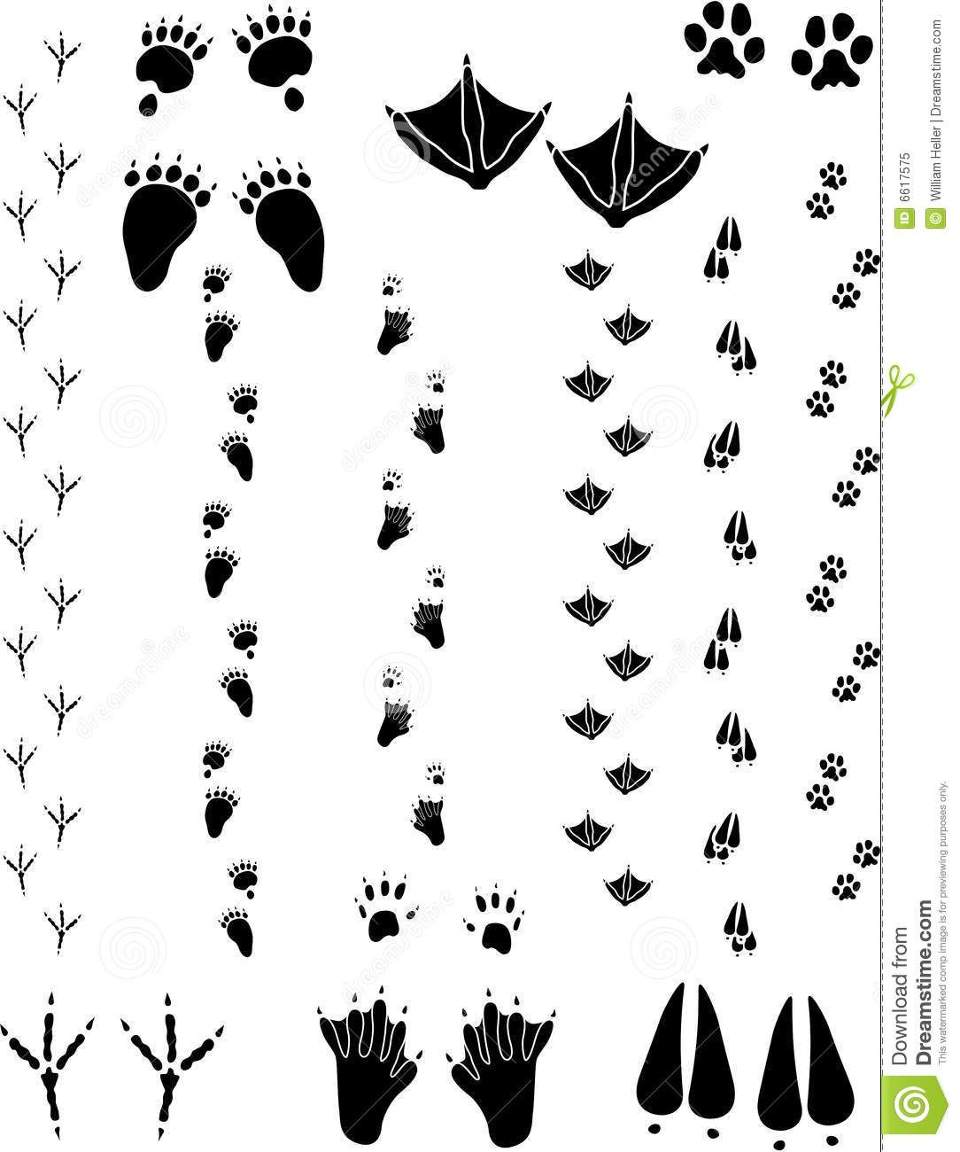Black bear track pattern bing images life of flynn for Bear footprints template