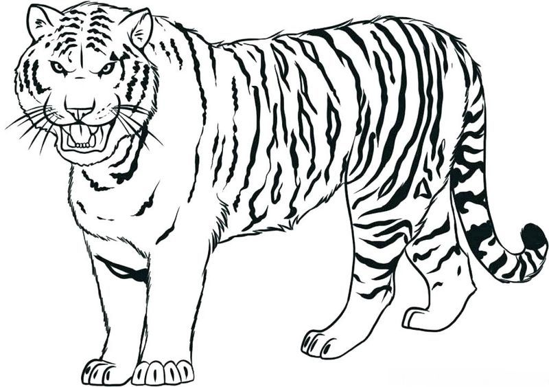 Clemson Tigers Coloring Pages Here Is A Coloring Page Of A Tiger