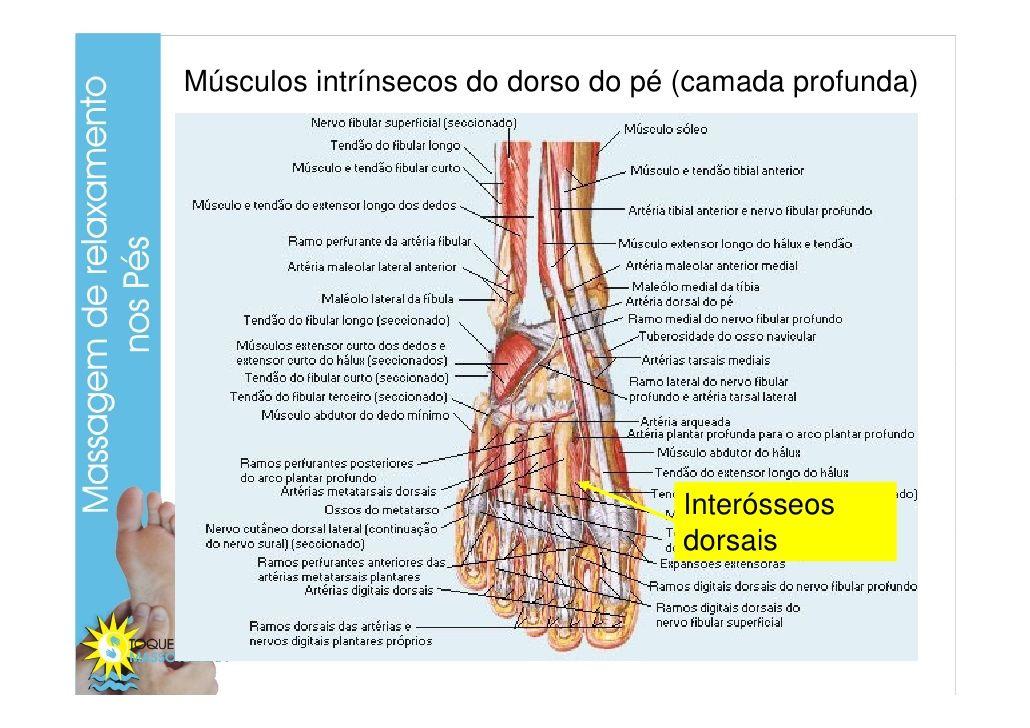 Resultado De Imagem Para Musculos Intrinsecos Dos Membros