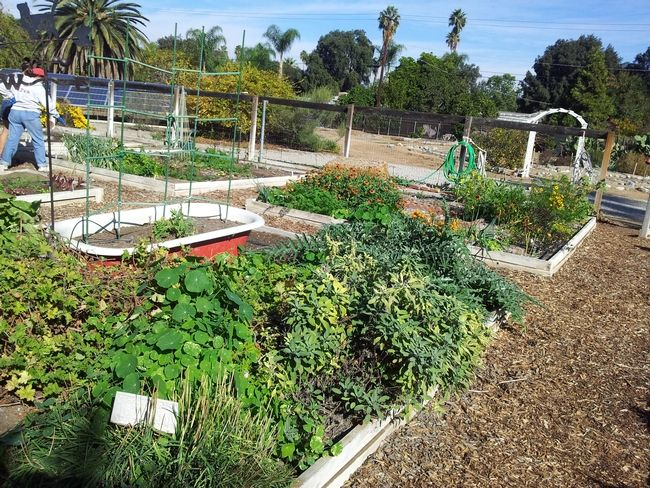 3b4352c49b119f1ea92ef1156b1f3075 - University Of California Master Gardener Program