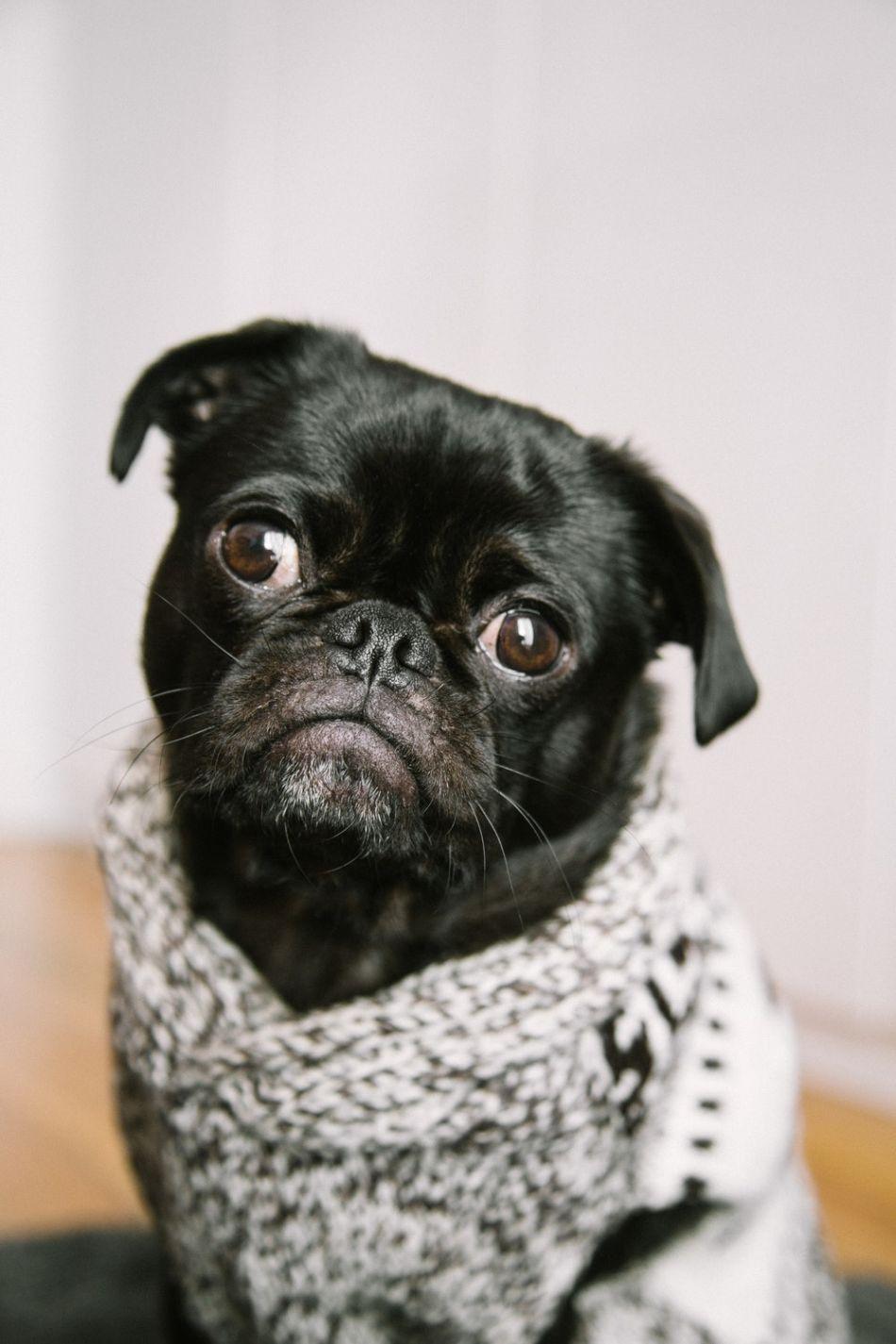 dog whisperer tips on puppy training Dogs, Dog images