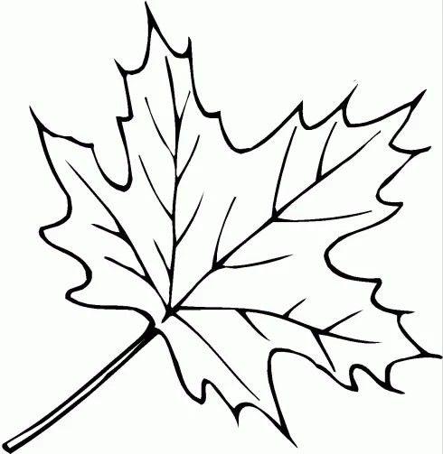 Pin By Carmen Braatz On Basteln Fall Leaves Coloring Pages Leaf Coloring Page Coloring Pages