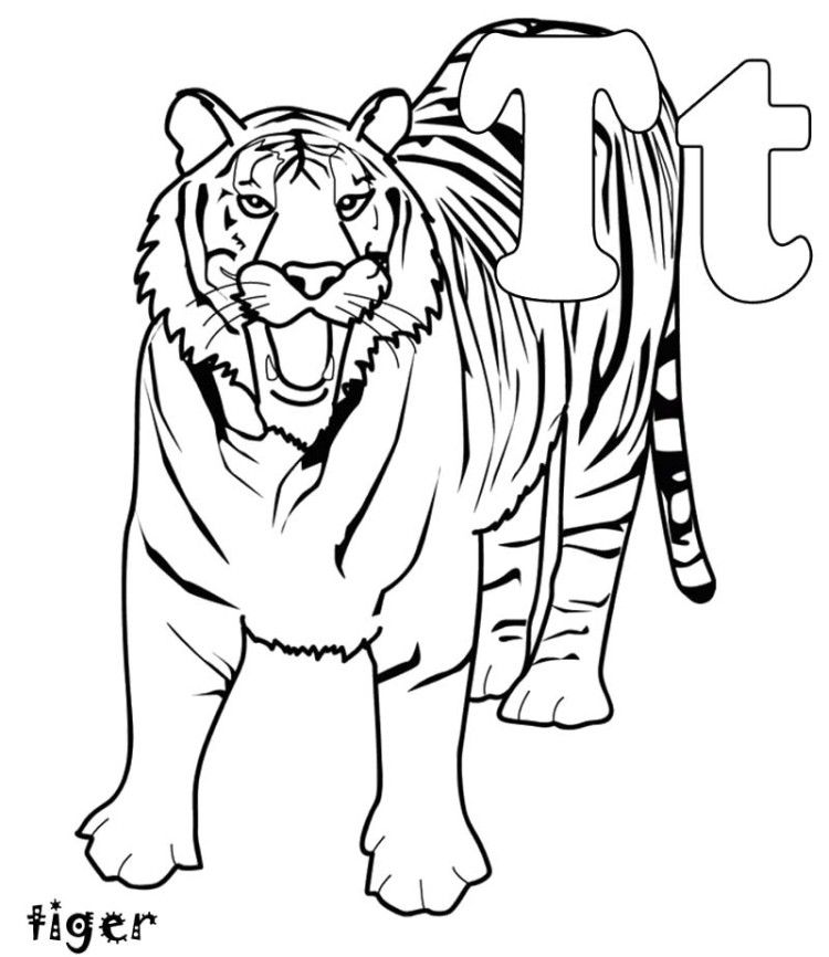 T for animal tiger coloring pages kids coloring pages for Coloring pages of tiger