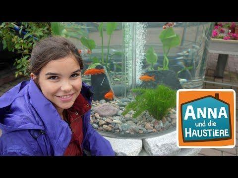 Goldfisch Reportage für Kinder Anna und die Haustiere