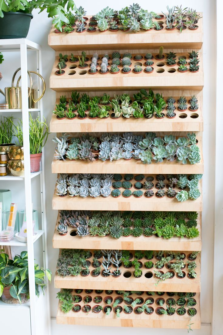 The ZEN Succulent | Re-stock of succulent variety in our Raleigh shop! #succulents