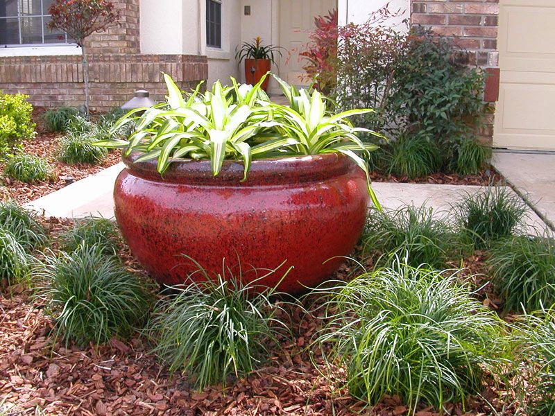 Florida landscaping plants plants shrubs and trees for Beach house landscaping plants