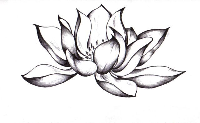 Gallery for simple lotus flower drawing tattoo ink pinterest gallery for simple lotus flower drawing tattoo mightylinksfo