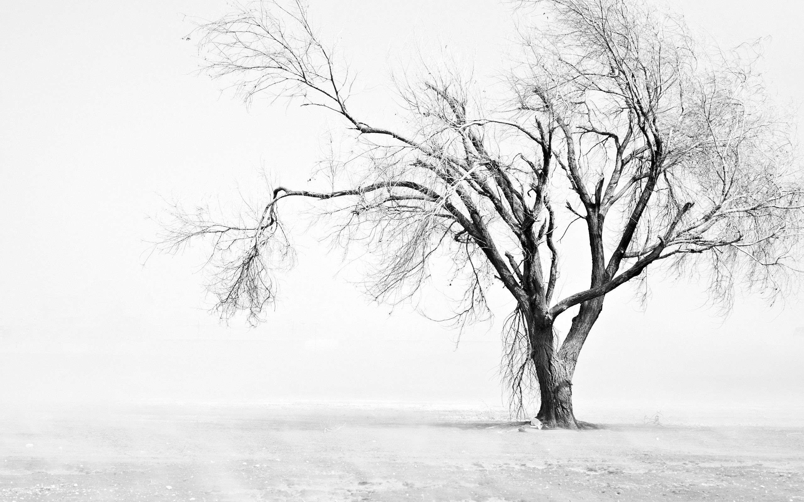 Tree Black And White Wallpaper For Mac 8z1 Wallpapers And Pretty