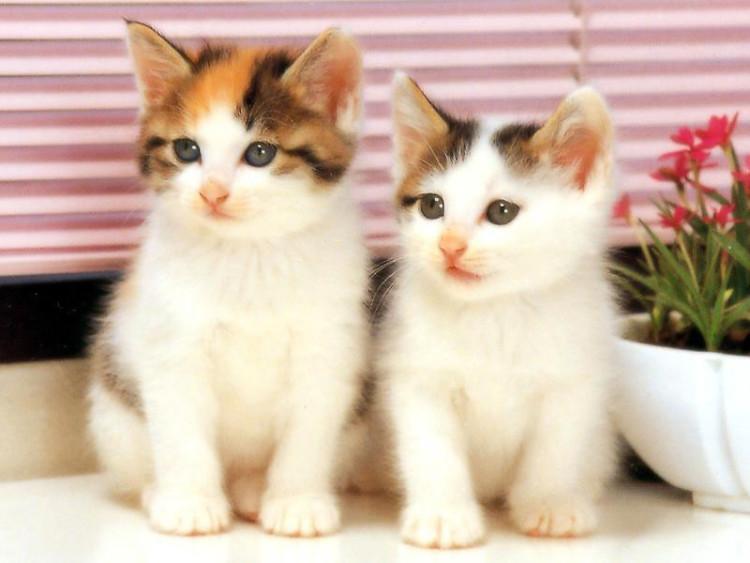 Gambar Kucing Lucu Dan Imut Ragam Informasi Kucing Gambar Kucing Lucu Kucing Lucu