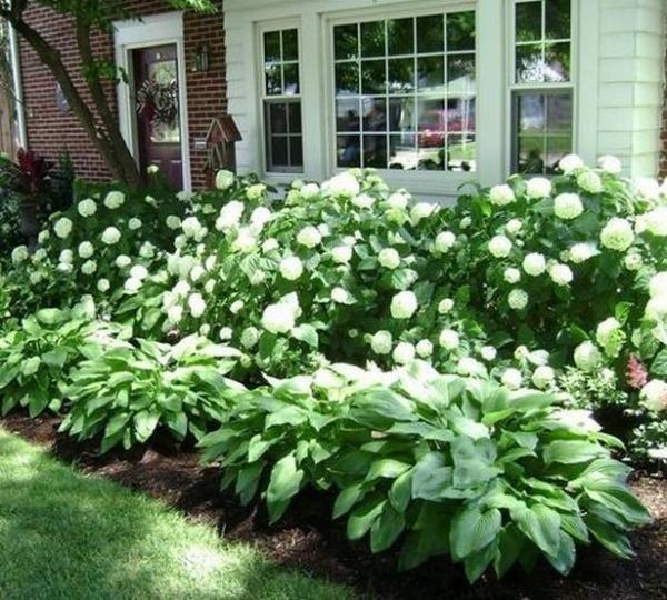 28 Beautiful Small Front Yard Garden Design Ideas: 60 Beautiful Small Flowering Trees Front Yards Design