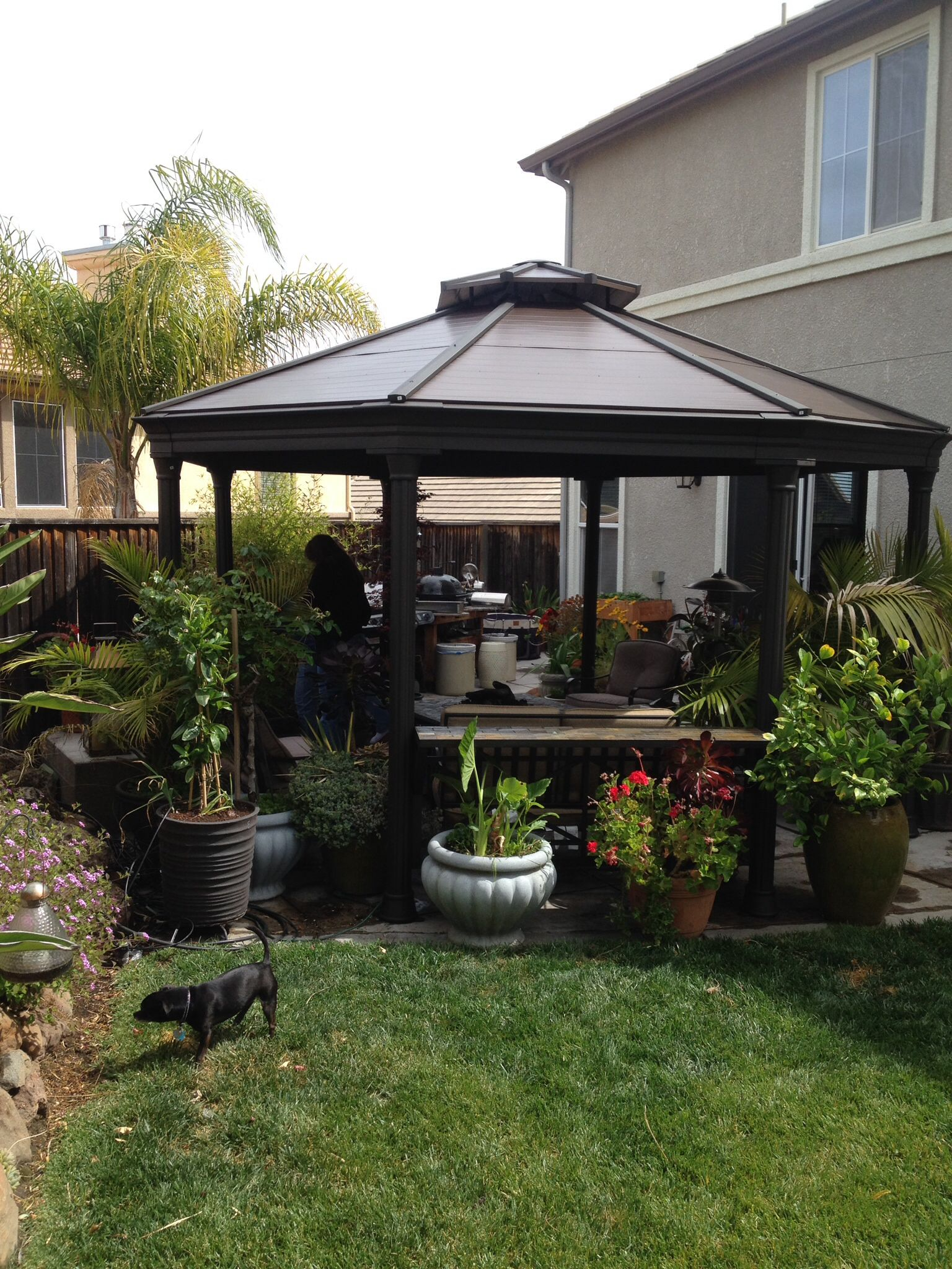 The Costco Gazebo In My Backyard Backyard Gazebo Backyard Gazebo
