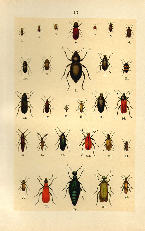 Vintage Beetle Print, 1890 Color Beetle Book Plate 7.5x5.25 oval red green blue bug 12 These would bug me