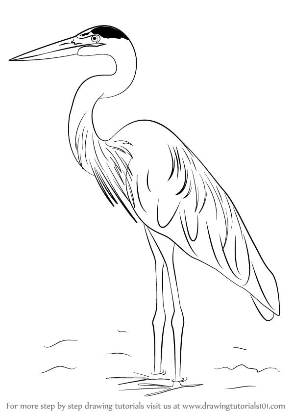 How To Draw A Great Blue Heron Drawingtutorials101 Com Heron Art Bird Drawings Birds Painting