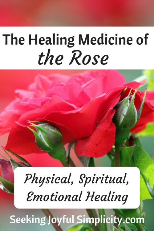 Exquisite Graceful Alluring The Rose Is Associated With Sophisticated Beauty And Love But The Rose Is Much More Than An Rose Recipes Herbs For Health Herbs