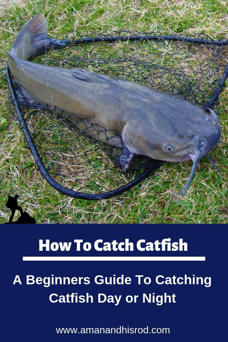 How to Catch Catfish Any Time of Day or Night   A Man and ...