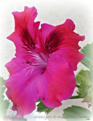 /Uma flor