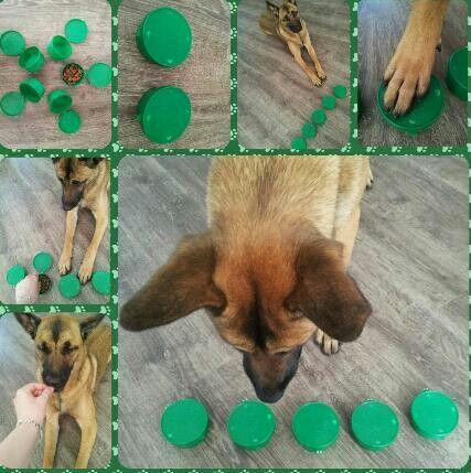 Rescue Dog Agility Diy Dog Toys Dog Puzzles Dog Games