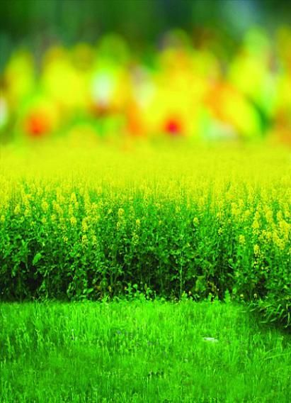 Find More Background Information about Background Lush Green Grass Photography Backdropsvinyl Photography Backdrop 3058 Lk,High Quality photography portable backdrop,China photography backdrop cloth Suppliers, Cheap backdrop kit from Background Made in China on Aliexpress.com