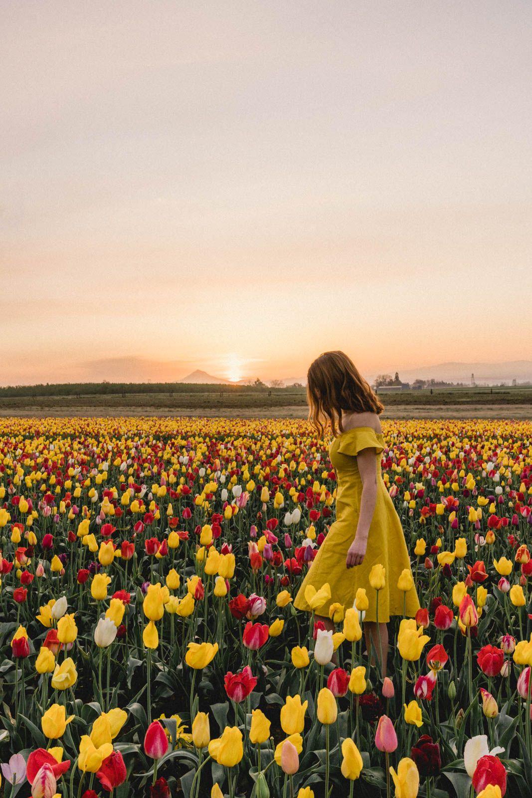 A Portland, Oregon Day Trip to Wooden Shoe Tulip Festival