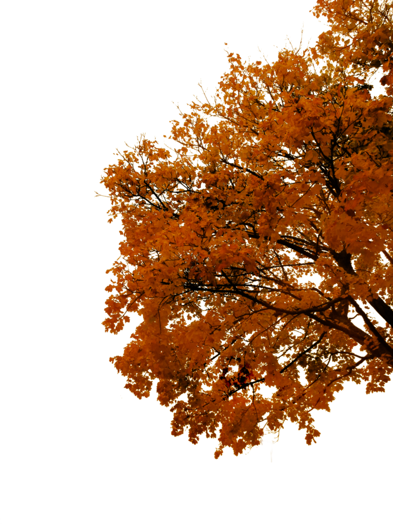 Autumn Tree Png 86 Images In Collection Page 2 Tree Photoshop Tree Images Autumn Trees