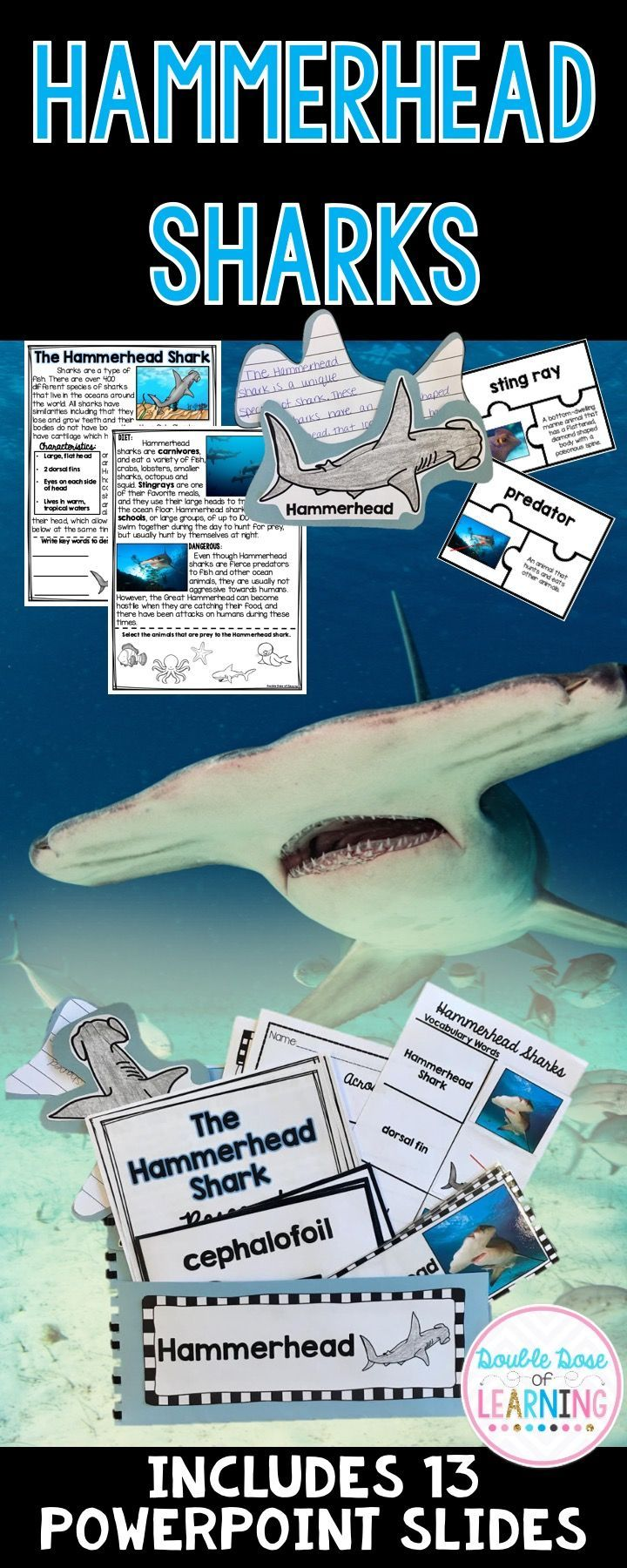 The Hammerhead Shark Research Unit with PowerPoint | Science teaching  resources, Ocean lesson plans, Math lesson plans