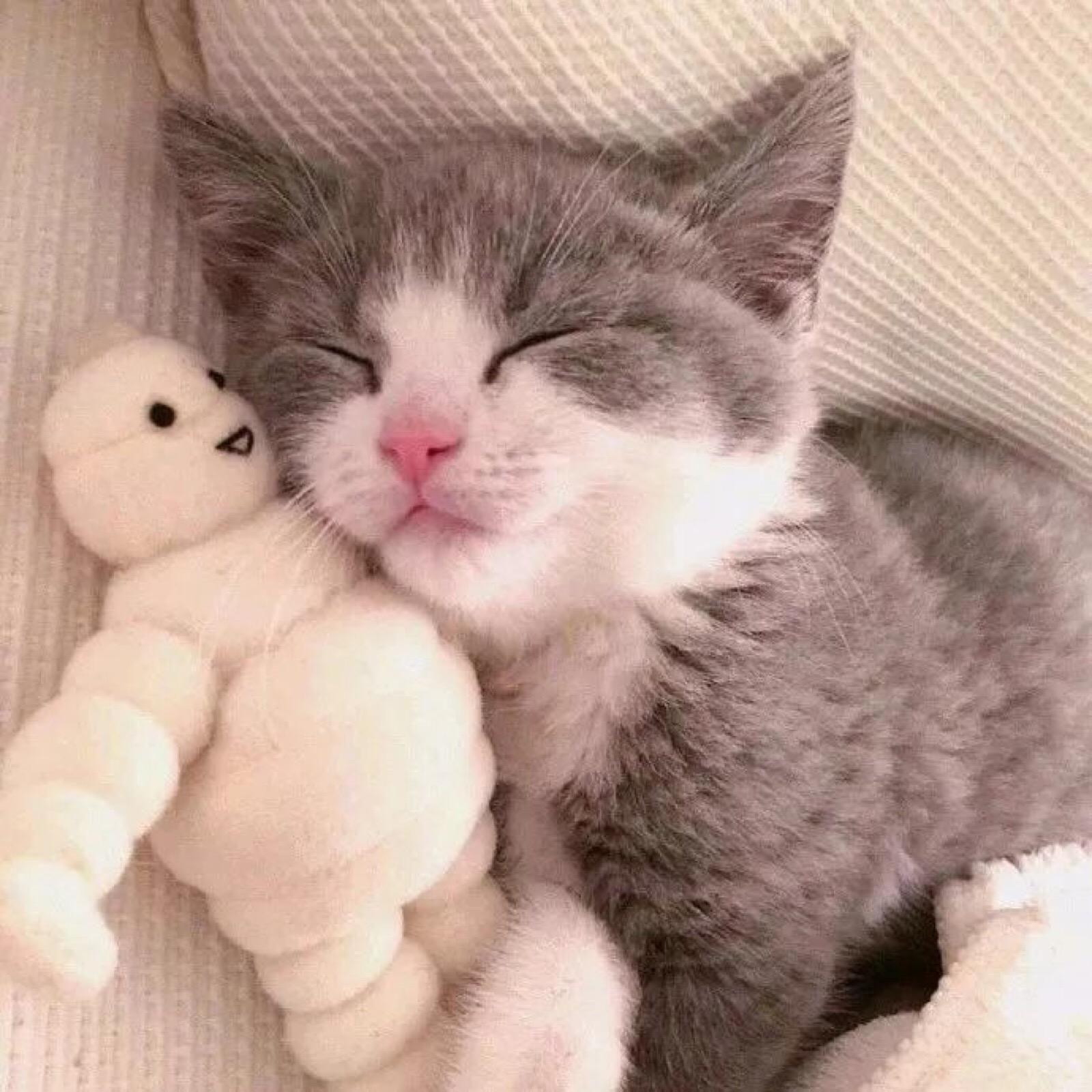 Cats Kittens Kitties Cats Cat Love Cute Animals