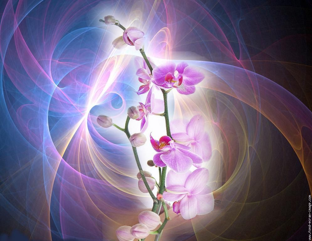 orchid branch tattoo | pin orchidee phalaenopsis wallpaper branche