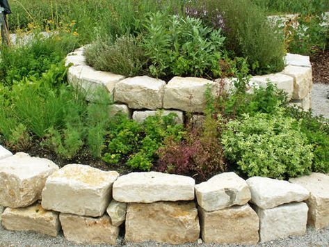 Photo of How to create a herb garden correctly