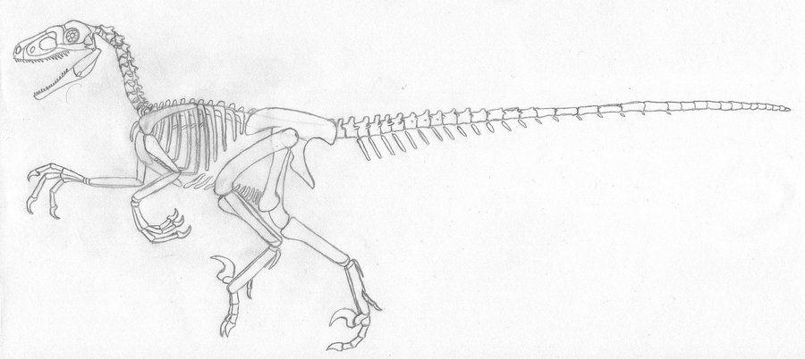 Jurassic Park Raptor Skeletal 2.0 by DOTB18.deviantart.com on ...