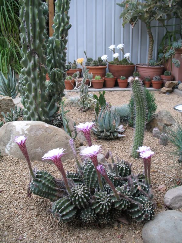Succulent And Cactus Garden Corner With Gravel And Sand