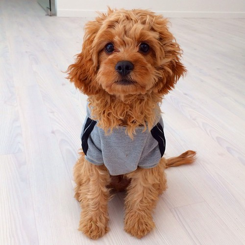 Fashion ♡ sweet Cute dogs and puppies, Dog love, Dog