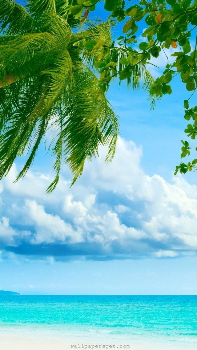 Tropical Paradise Beach And Palm Tree Iphone 5 Wallpaper