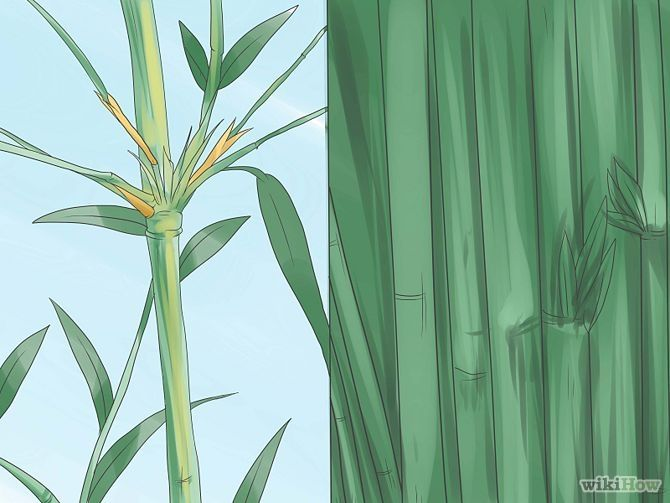 Grow Bamboo Step 2.jpg