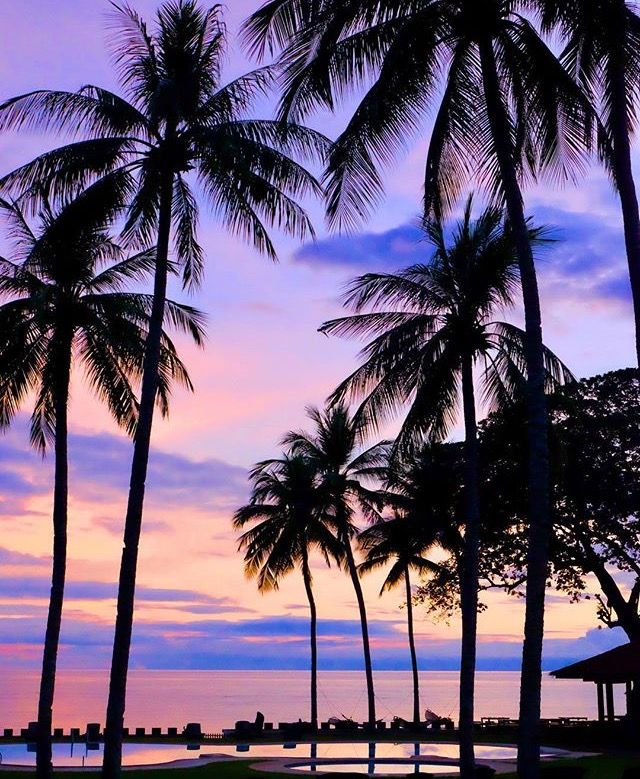 Palm Tree Iphone Wallpaper: Pinterest//tbhjessica ˜�☾IG: Jessica.peters