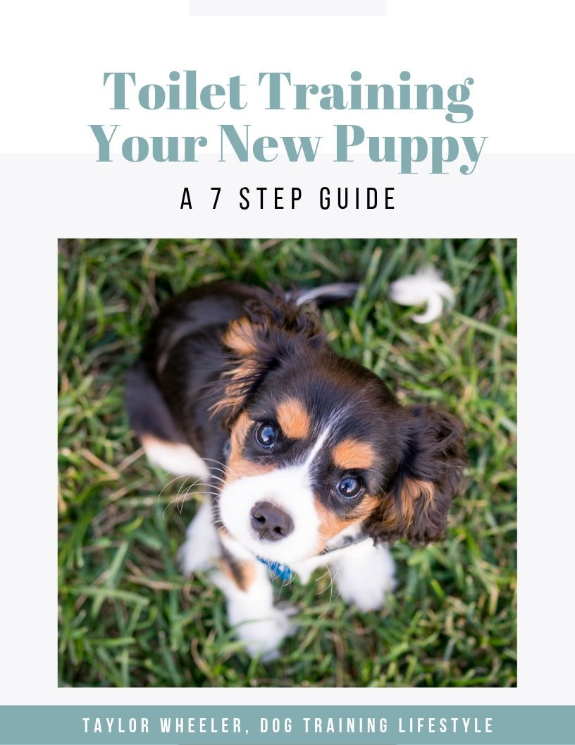 Toilet Training Your Puppy Free Ebook Just For You House Training Dogs Puppies Puppies New Puppy