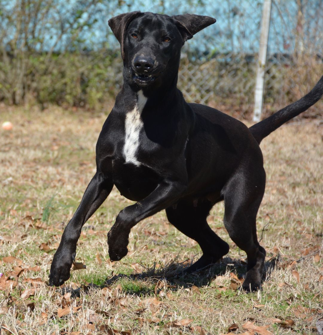 Adopt Priscilla On Animal Shelter Adoption Dogs