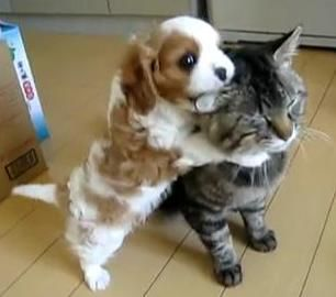 Cute Dogs And Cats Together Dogs And Cats Play Together Kawai Img