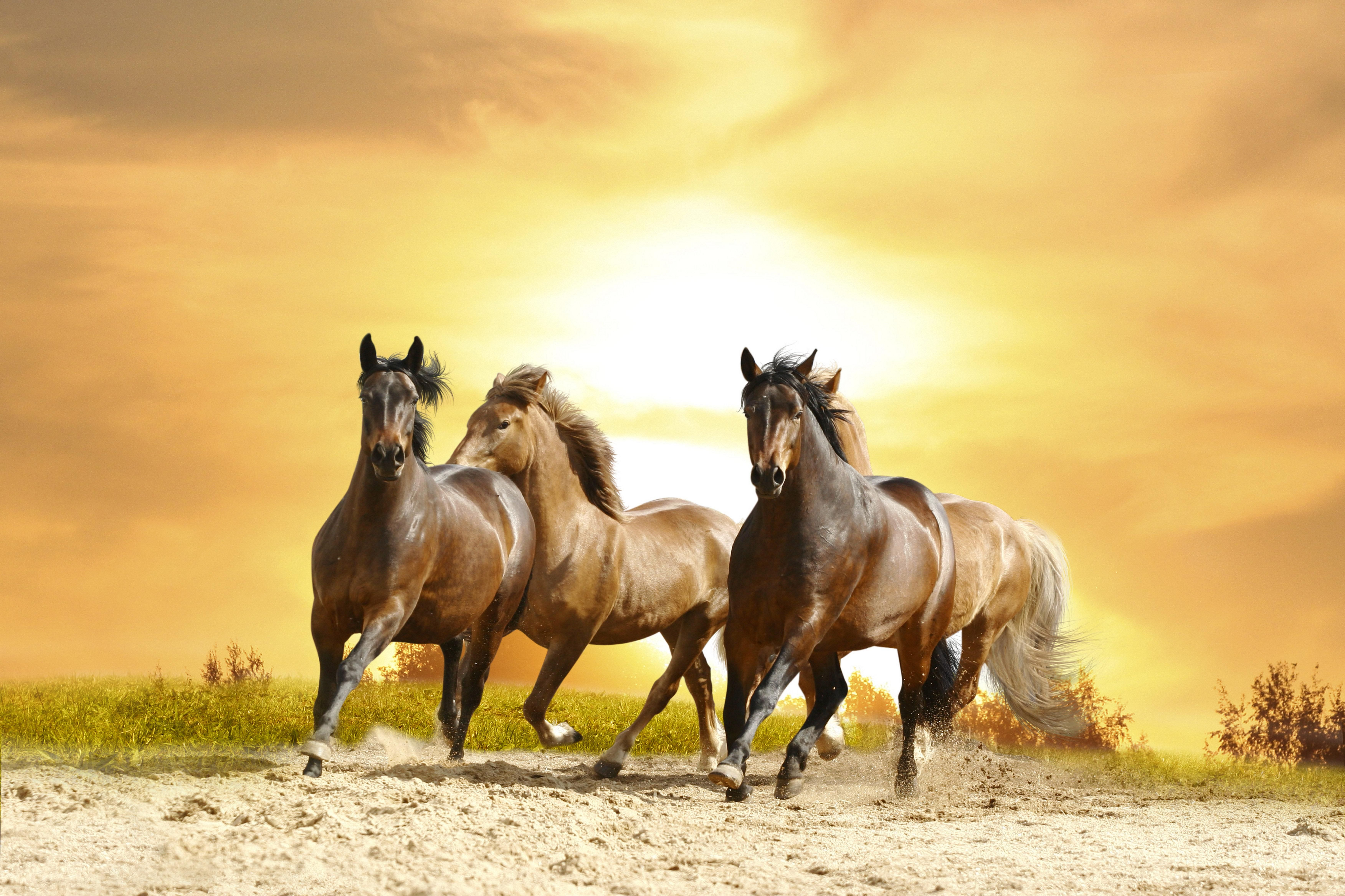 Beautiful Wallpaper Horse National Geographic - 3b4c01414125073c9ee9b8b21238232b  Picture_206632.jpg