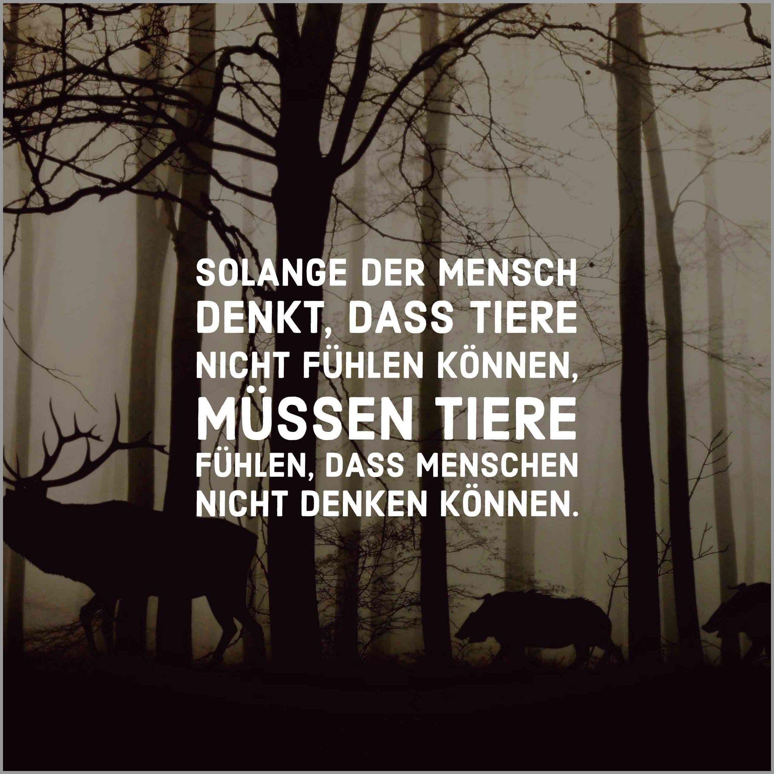 Solange Der Mensch Denkt Dass Tiere Nicht Fuehlen Koennen Muessen Tiere Fuehlen Dass Menschen Nicht Denken Koennen Best Quotes Things To Come Truth