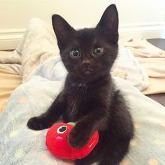 7 Reasons Why Cats Are the Best Pets #adorablekittens