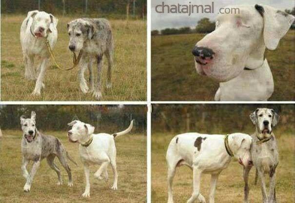 وفاء كلب يقود صديقه الكلب الاعمى Blind Dog Guide Dog Dogs